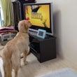 TV見てるよ!