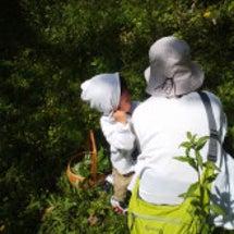 旅する森 親子コース…