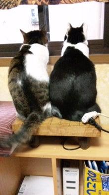 但馬の小京都 出石  手打ち皿蕎麦『入佐屋』の瓦版-130521_051326.jpg