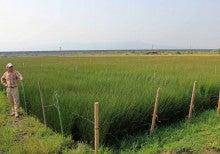 いぐさにまなぶ-現地検討会_2013年5月21日