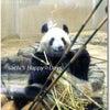 「上野動物園」へ行ってきました♪♪の画像