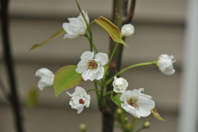 北海道の野生動植物写真-なし