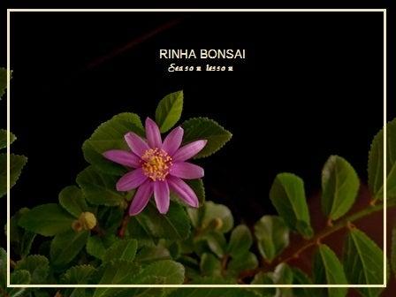 bonsai life      -盆栽のある暮らし- 東京の盆栽教室 琳葉(りんは)盆栽 RINHA BONSAI-琳葉盆栽 モダン スイレンボク