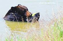 中国大連生活・観光旅行ニュース**-旅順ワニ園 オカマショー と 獅虎園