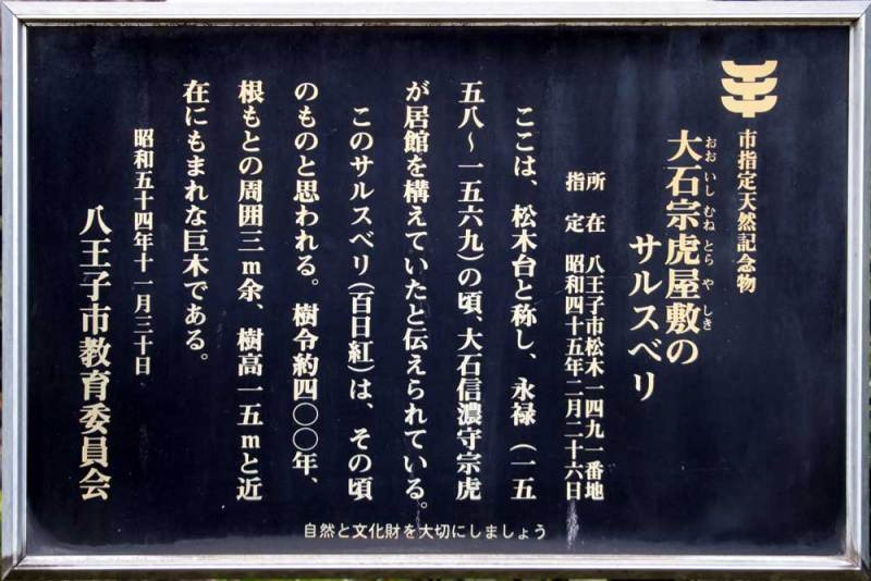 大石氏館/百日紅の説明板(拡大)