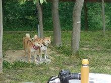 柴犬ムクと僕の好きな風景