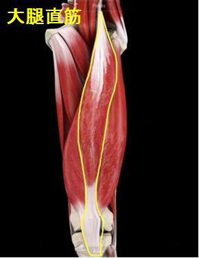 札幌 中央区 肩こり・腰痛・膝痛を改善するストレッチをしませんか!?-大腿直筋