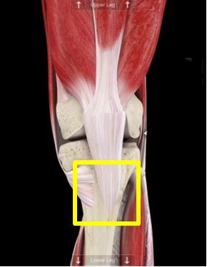 札幌 中央区 肩こり・腰痛・膝痛を改善するストレッチをしませんか!?-大腿直筋付着部