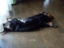 犬太郎が来た!-DSC_0781.jpg