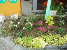 夢ある 倉橋歯科医院のブログ-DSC_0310.jpg
