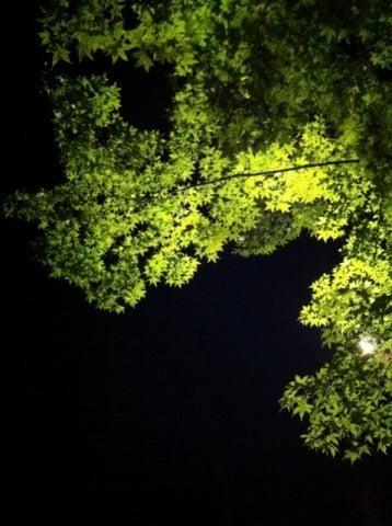 葉っぱなまいにち・・・-新緑
