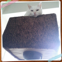猫タワーの上から失礼…