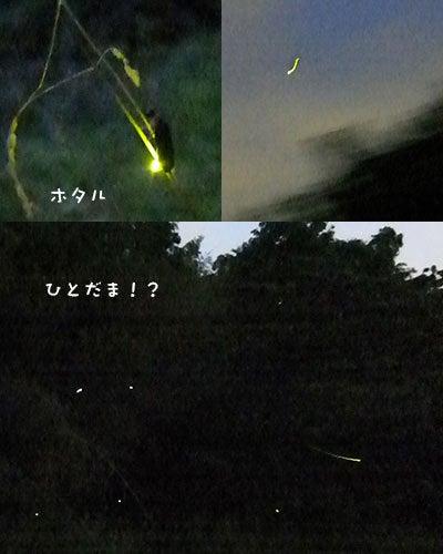 へにょへにょ日記-20130529