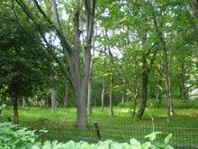 夫婦世界旅行-妻編-代々木の森