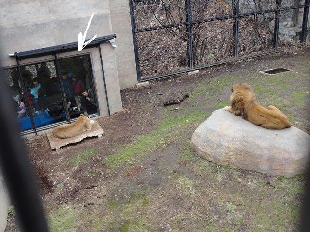 イタグレと猫の「トム&ジェリー」