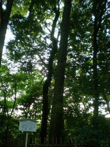 夫婦世界旅行-妻編-代々の大木