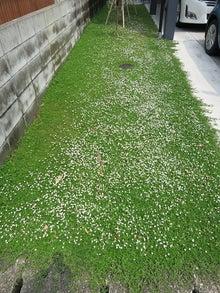 白い花がいっぱいです。