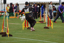 ドッグスポーツ-11