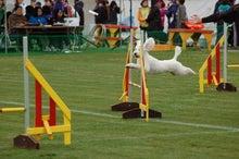ドッグスポーツ-12