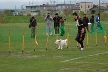 ドッグスポーツ-5