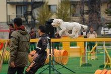ドッグスポーツ-2