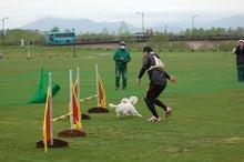 ドッグスポーツ-6