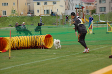 ドッグスポーツ-3