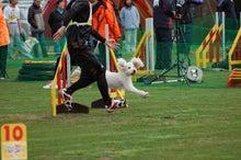 ドッグスポーツ-j1