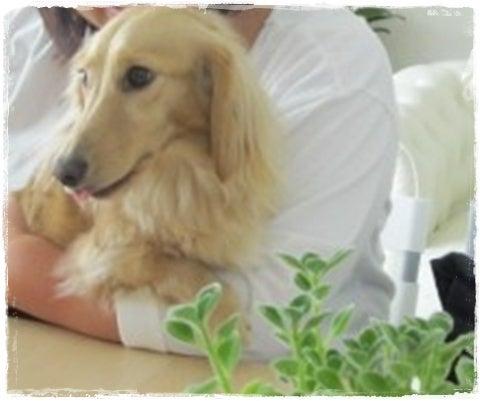 旅犬Lani&Leaのほほん風船記-Lea