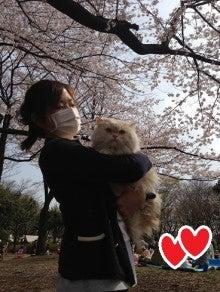 美猫ちゃんブログ-美人猫 画像