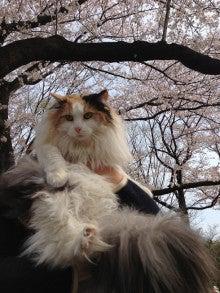 美猫ちゃんブログ-美猫 画像