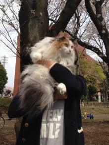 美猫ちゃんブログ-ノルウェージャン・フォレストキャット 画像