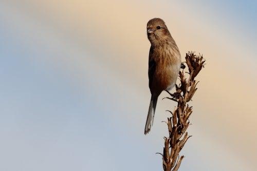鳥好きFPのつれづれ日記