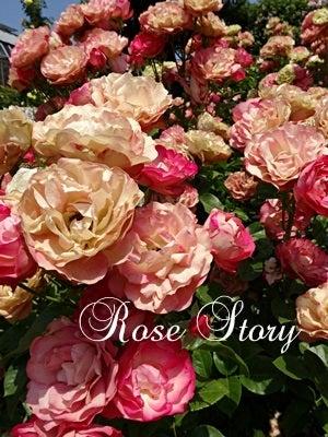 市川市 Rose Storyのシルクフラワー教室