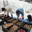 雪中野菜収穫。in北…