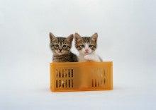 動物にやさしい自然療法が好きなベジタリアン院長のふじわら動物病院ブログ