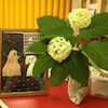 綺麗な紫陽花いただいた^_^の画像
