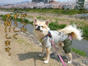 $ゆる☆いろ-2013komugi-san_top