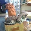 杉並区迷い猫