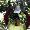 柿栽培学習の画像