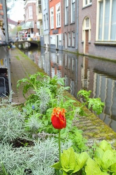 オランダ通信-ask-nl_20130613