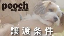Pooch Dog Rescue-譲渡条件
