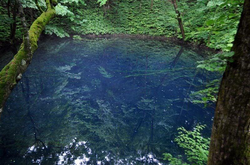 $白神山地ツアーの白神なびスタッフブログ-2013年6月中旬の白神山地の十二湖10