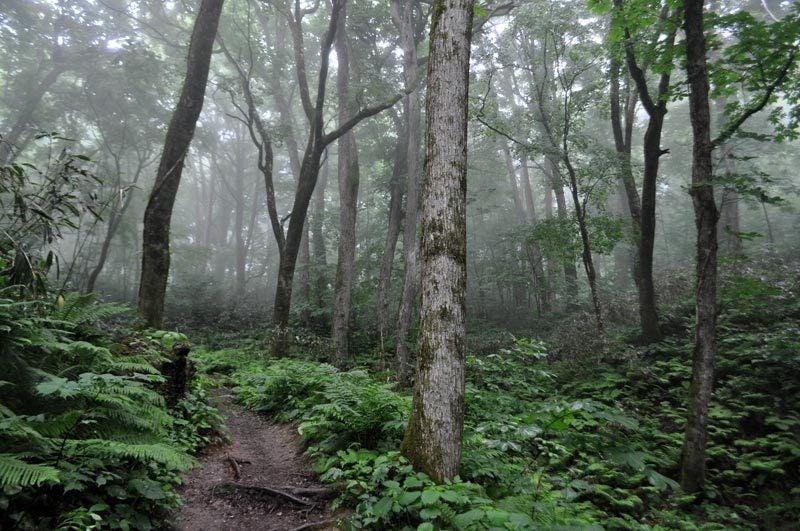 $白神山地ツアーの白神なびスタッフブログ-2013年6月中旬の白神山地の十二湖6