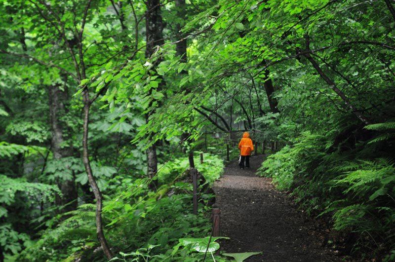$白神山地ツアーの白神なびスタッフブログ-2013年6月中旬の白神山地の十二湖4