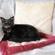 黒猫ウニは悪魔の使い…