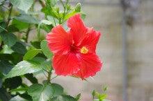 プレマ宮古島のブログ