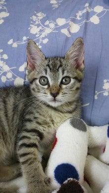 $猫好きネイリストの独立日記
