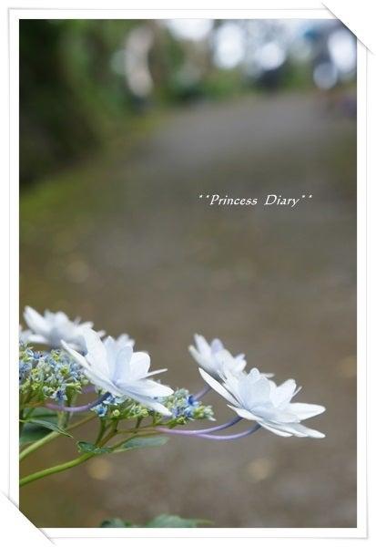 Princess Diary
