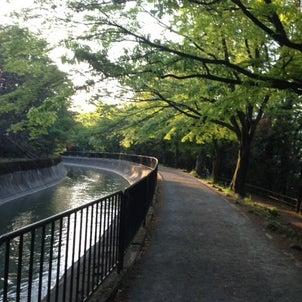 爽やかな朝~自然なひととき~の画像